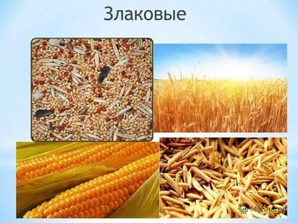 Виды и состав злаковых культур