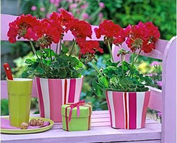 Какие комнатные растения стоит иметь в любом доме?